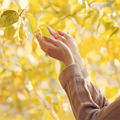 A pair of hands reach to catch a leaf as it falls from a tree.