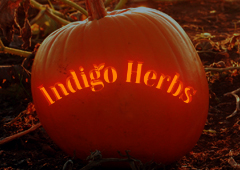Happy Halloween from Indigo Herbs