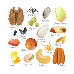 Nuts Illustration
