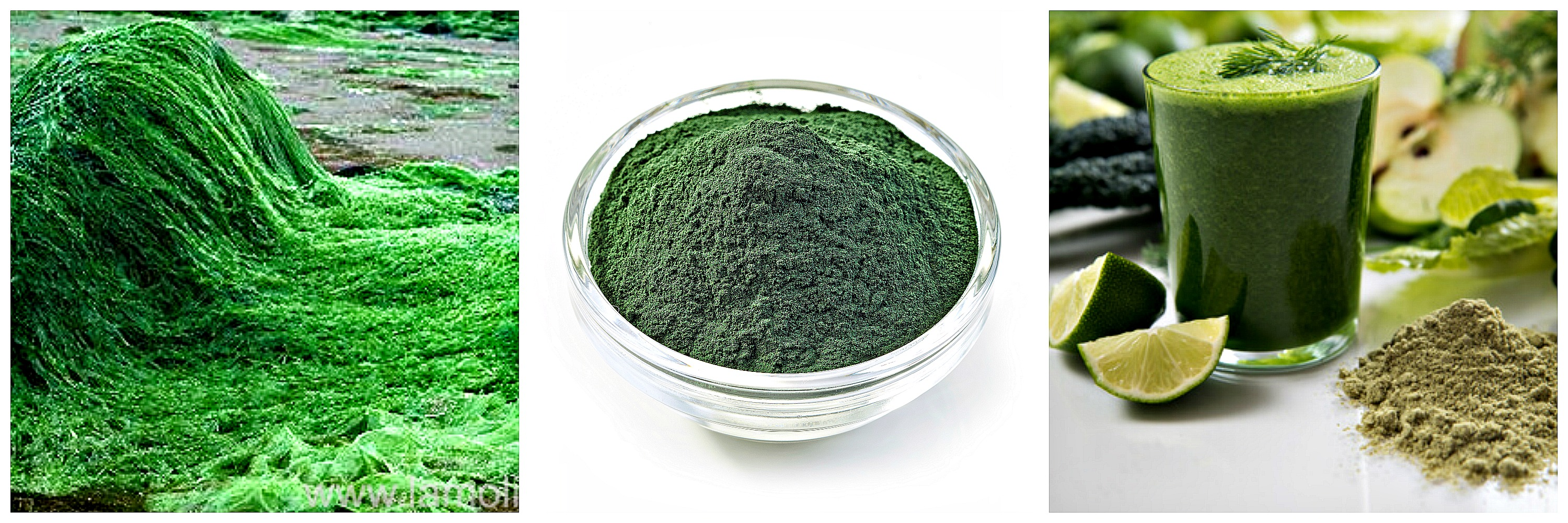 Spirulina growing, powder and smoothie