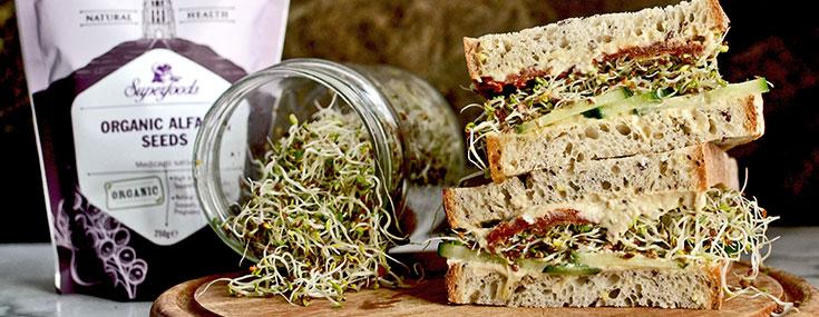 Alfalfa Sprout Sandwhich