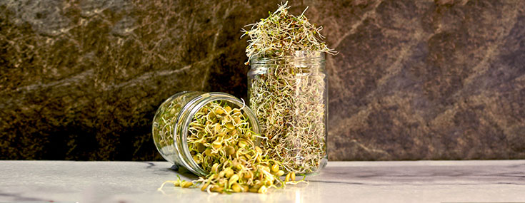 Sprouting seeds in a jar