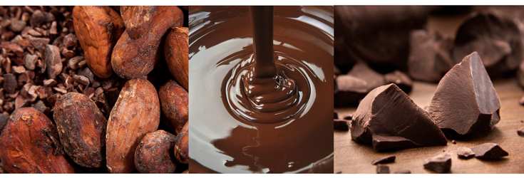 Cacao Bean, Liquid Chocolate and Raw Chocolate
