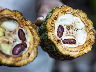 Why Our Cacao is the Real Raw Cacao