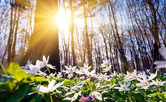 Spring Lifestyle Image
