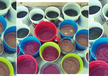 An image of the green, brown and pinky red smoothies all together in a variety of cups before they were drank.