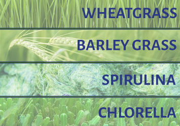 Top 4 Superfoods: Wheatgrass, Barley grass, Spirulina and Chlorella